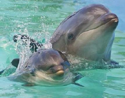 права дельфина - эволюция человека